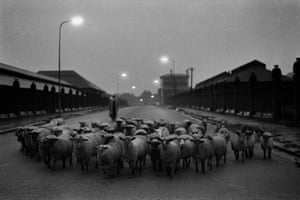 Sheep going to slaughter near Caledonian Road in London in 1965.