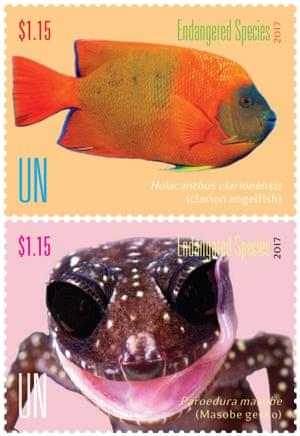 Clarion angelfish and Masobe gecko