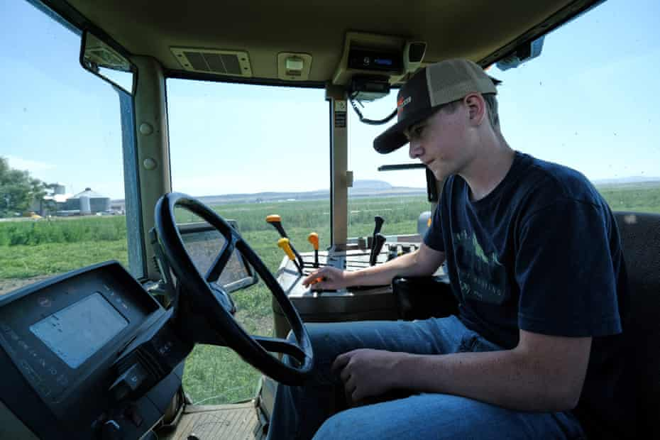 Spencer Seus drives a tractor to cut weeds in a field of mint at his family's farm.