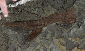 A perfectly preserved 66m-year-old fish fossil uncovered by Univedrsity of Kansas researchers, revealing life on the day a huge asteroid hit the Earth.