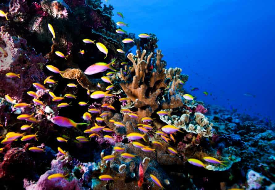 Coral reef, Nauru