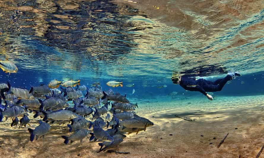 Underwater man snorkelling in Rio Da Prata looking at fish