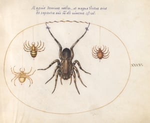 Drawings of nature by Joris Hoefnagel from the book Insect Artifice published by Princeton University Press..