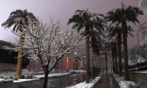 Snow-covered trees in Vegas on Thursday.