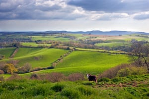 Waddon Hill, looking south towards the West Dorset Heritage Coast.