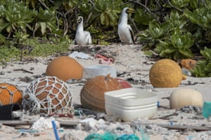 Two masked boobies walk among rubbish at the high tide mark on a beach on Henderson Island, an uninhabited archipelago of the Pitcairn Islands in the South Pacific.