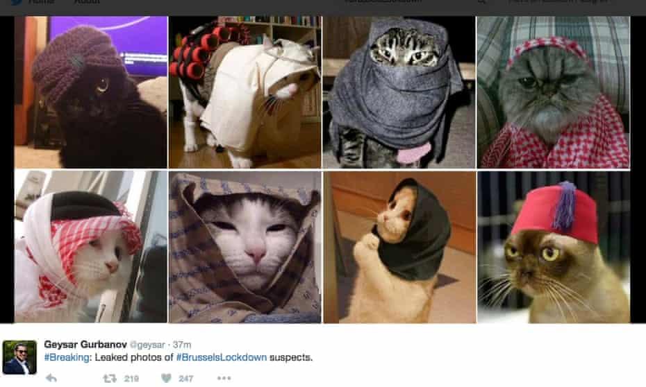 Belgian counter-terrorist cats