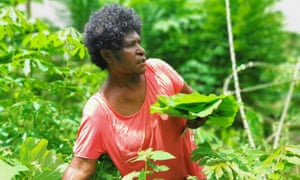 Christine Valvalu collects Taro leaves for cooking.