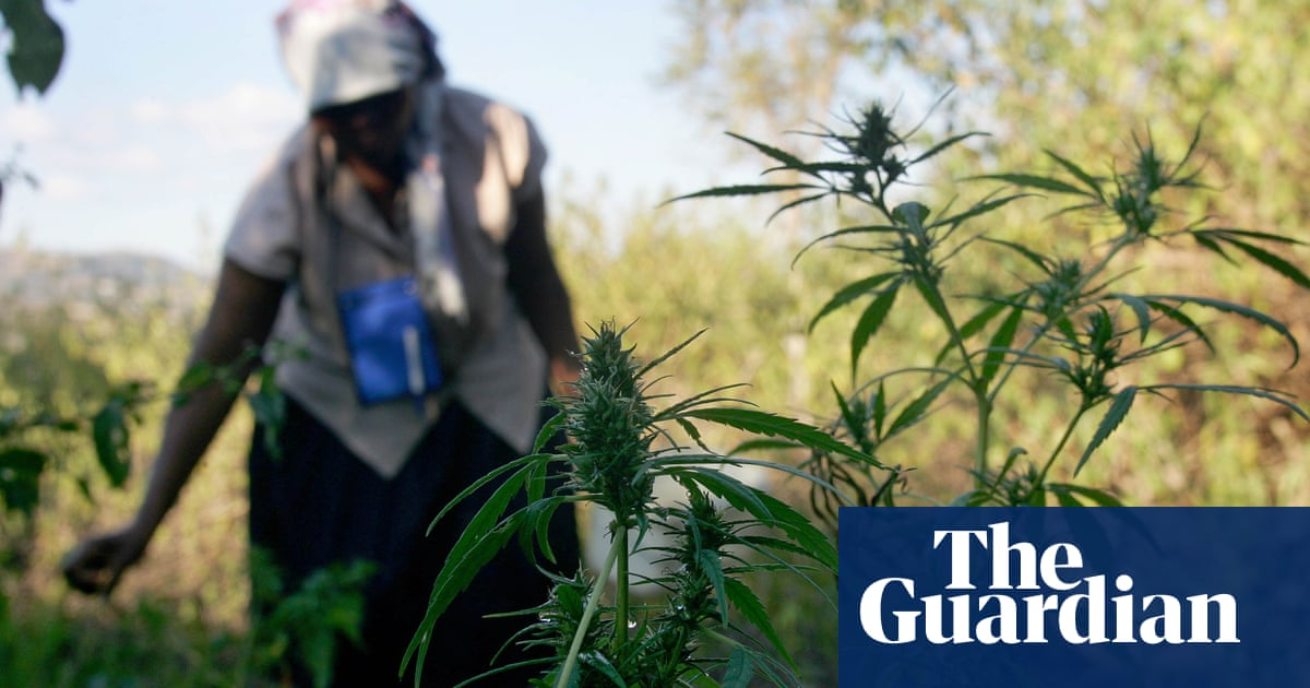 'Swazi gold': grandmothers in Eswatini growing cannabis to make ends meet