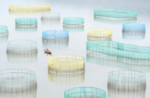 A farm worker rows out to inspect the nets of a large crab farm in the sea. Xiapu, Fujian, China.