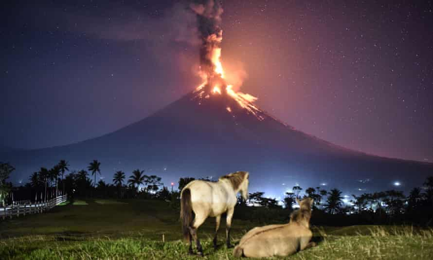 Horses look on as Mount Mayon erupts in the early morning.