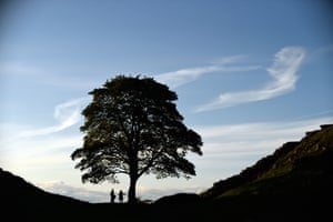 The Sycamore Gap tree, Hadrians Wall, NorthumberlandNominated by Victoria Gibson One of the most photographed trees in the UK, growing in a dramatic dip alongside Hadrians Wall. Famous for being filmed in Robin Hood Prince of Thieves in 1991.