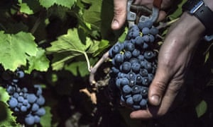 The wine-growing regions affected included some familiar names, among them Alsace, Champagne, Burgundy and Languedoc.