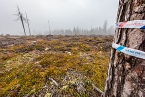 A few trees are left standing with tape bearing labels such as 'nature conservation' and 'consideration' around their trunks in Pajala municipality