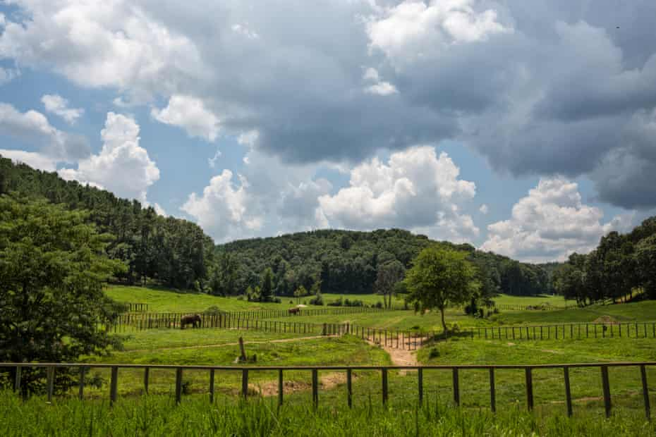 The Elephant Sanctuary, Hohenwald, Tennessee