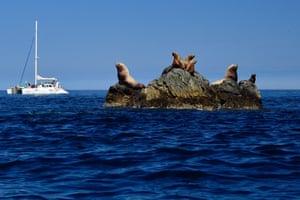 Steller sea lions rest on a rock in Zheleznaya Bay in the Kamchatka Peninsula, Russia