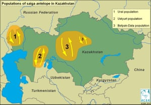 Saiga distribution map.