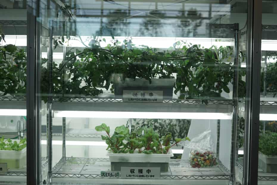 Vegetables growing in the Osaka Grand Mall