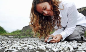 Dr Catalina Pimiento collecting fossil shark teeth in the field. Courtesy of the Smithsonian Tropical Research Institute