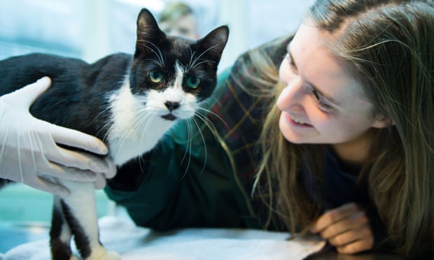 Missing Cat Returns for Christmas Seven Years Later