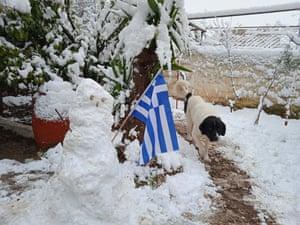 A dog walks past a snowman with a Greek flag