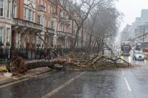 A fallen tree near Victoria train station in London