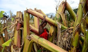 <strong>Port Vila, Vanuatu</strong><br>A young boy plays in a destroyed banana plantation in Mele after cyclone Pam ripped through the region
