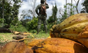 Cocoa pods lie on the ground in Ivory Coast