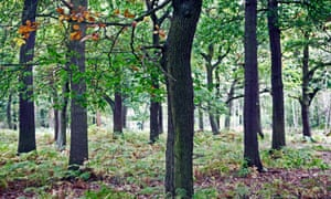New assessment has found the number of trees on Earth has almost halved since the beginning of human civilisation.