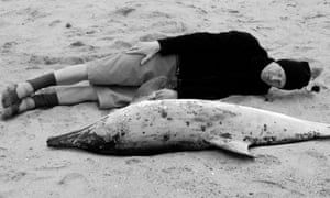 'Sublime self-dissolution': Philip Hoare, on the beach in Provincetown, Massachusetts, with a dead dolphin
