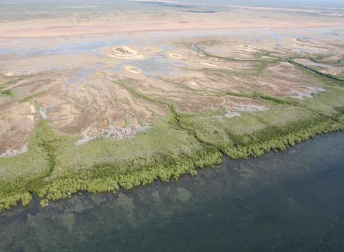 A healthy mangrove ecosystem at the Gulf of Carpentaria (before the marine heatwave), Queensland, Australia.