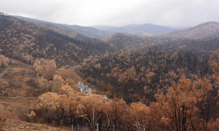 When Luke Pearce returned to Mannus Creek after the fires he was confronted with a scene of carnage