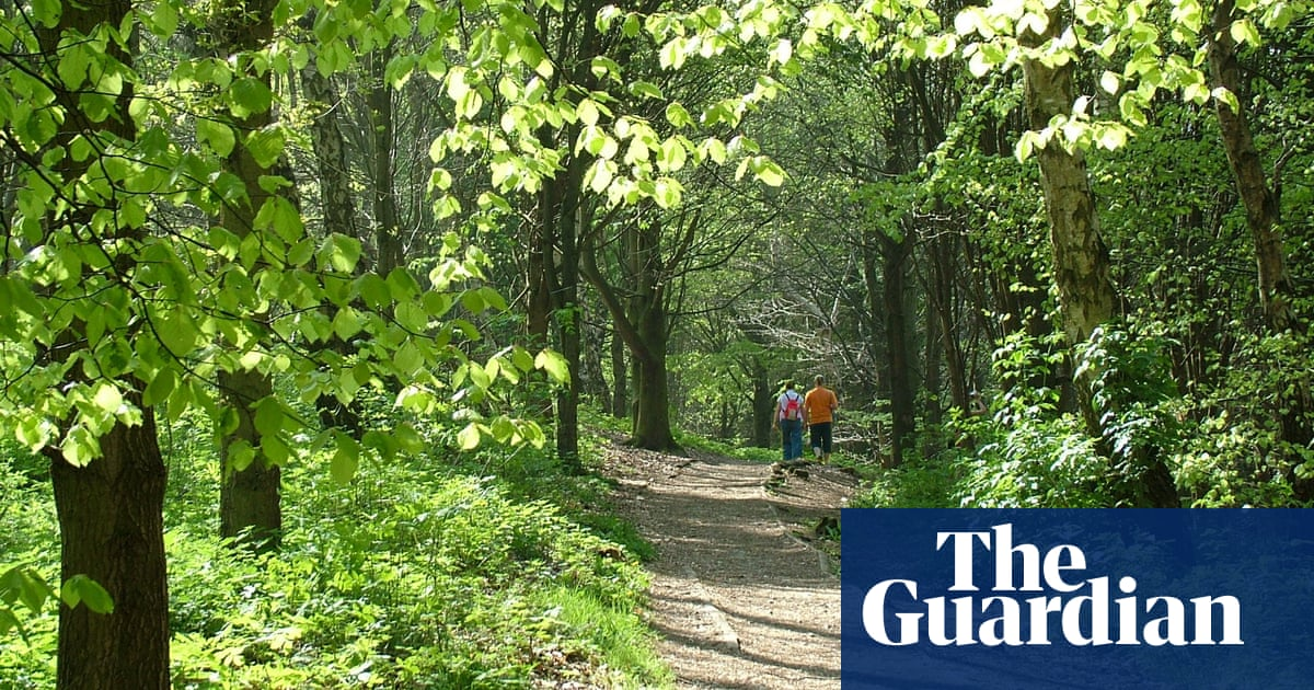 Walking the National Forest Way: a stroll amid a transformed