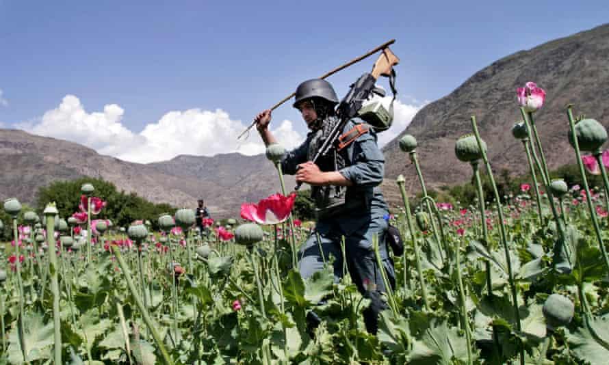 An Afghan policeman destroys an opium poppy field in Noorgal, Kunar province, Afghanistan