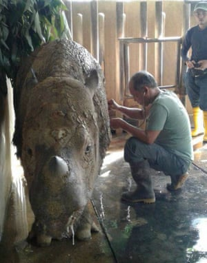 Malaysia''s last female Sumatran rhinoceros, know as 'Iman', is gravely ill, with vets on 24-hour watch.
