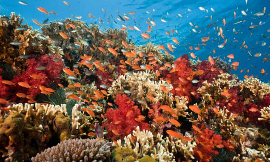 Corals get their bright colors from algae within them. When corals live under stress, they expel the algae and turn pale white, leaving them starving but not dead, yet.
