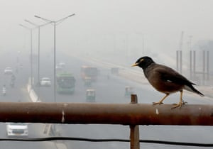 An Indian Myna bird sits above an overpass engulfed in smog, in New Delhi, India
