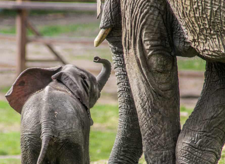 The Aspinall Foundation had announced plans to transport 13 savannah elephants from Howletts Wild Animal Park to Kenya.