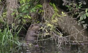 river Otter beaver