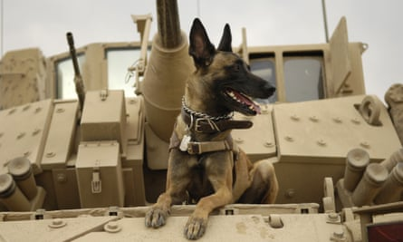 US air force military working dog Jackson sits on a Bradley fighting vehicle before heading out on a mission in Iraq.
