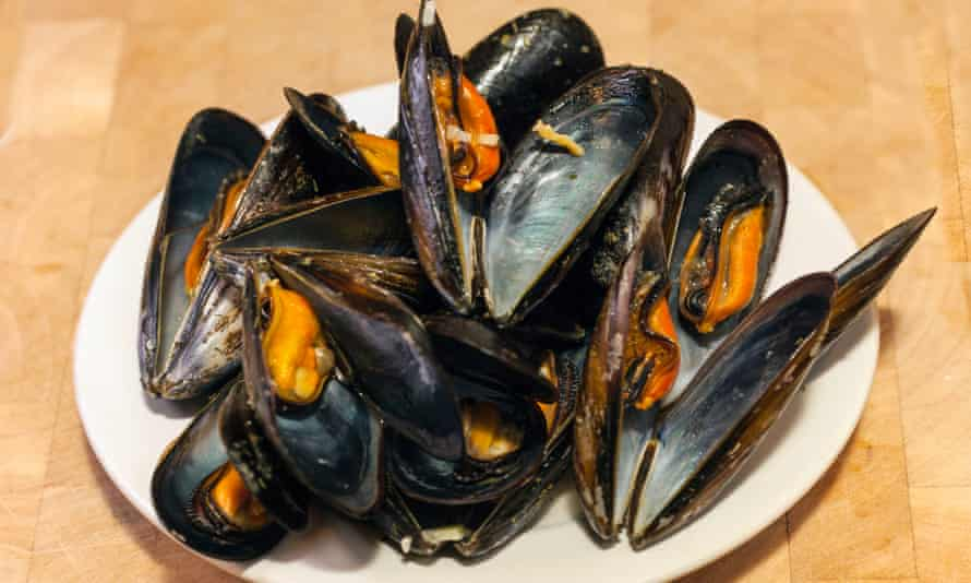 Mussels … under scrutiny by scientists.