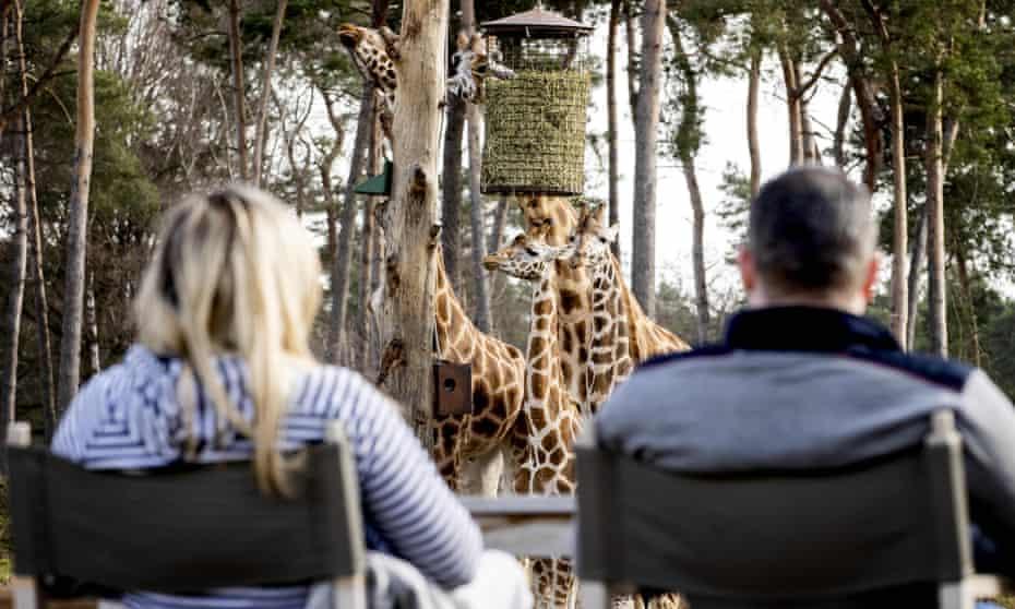 People watch giraffes at a safari park.