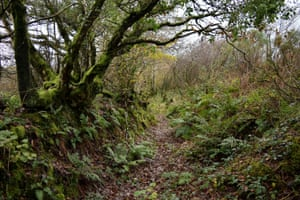 Ferns and moss cover the banks of the old drovers' trail at Bowden Down.
