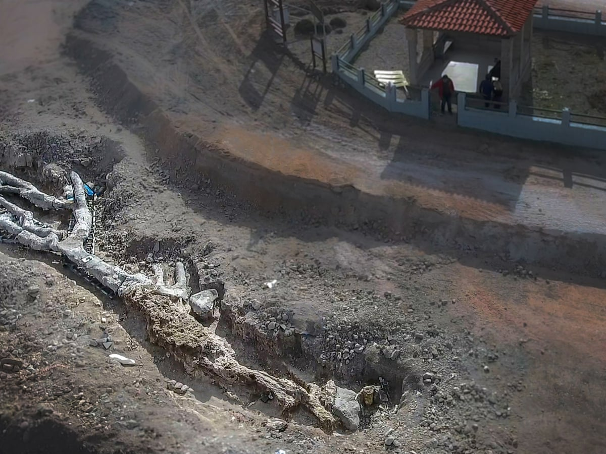 Unique' petrified tree up to 20m years old found intact in Lesbos | Greece | The Guardian