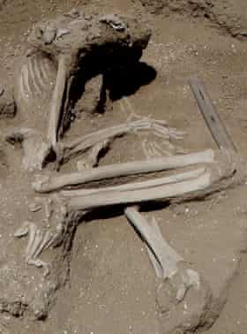 A woman's skeleton with fractures