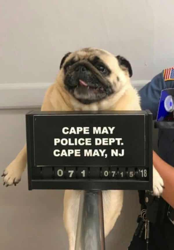 Mugshot of Bean, the lost dog, New Jersey