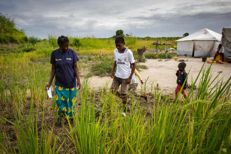 Clara Edna Chevambo and her children walk through a small rice plantation opposite her tent in the Savane camp in central Mozambique