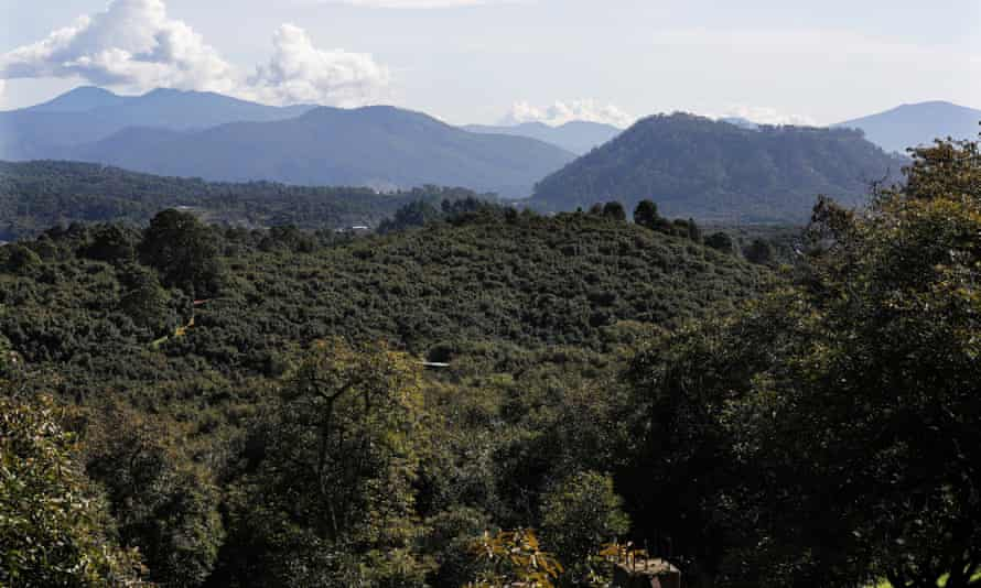 Avocado orchards stretch far into the mountains in Michoacán state.