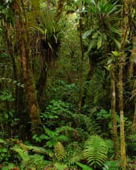Forest in Samoa.
