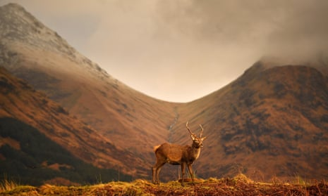 Deer grazing in Glen Etive, Scotland